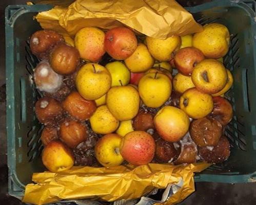 خطر فساد بیش از ۴۰ هزار تن سیب در آذربایجانغربی