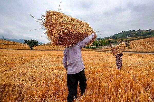 ۵ هزار خانوار روستایی آذربایجان غربی از بیمه بازنشستگی برخوردار هستند