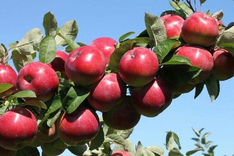 تقویت بورس کالا درآذربایجانغربی عامل حل مشکل فروش محصولات کشاورزی است