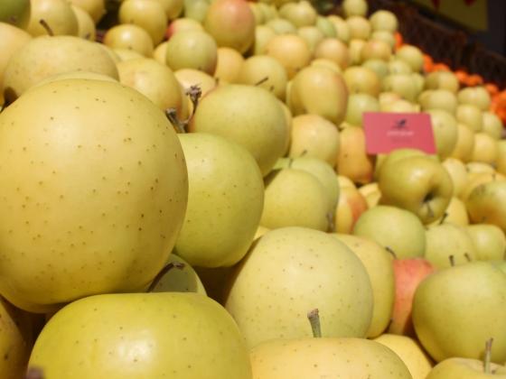۷۲۰هزارتن سیب آذربایجان غربی درانتظار صادرات/پیمان ارزی مانع اصلی